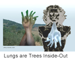 Lungs are Trees